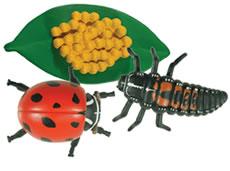 Ladybug Life Cycle Figurines