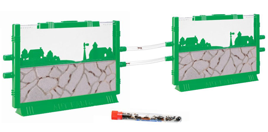 2 Connectable Ant Farms SHIPPED WITH LIVE ANTS