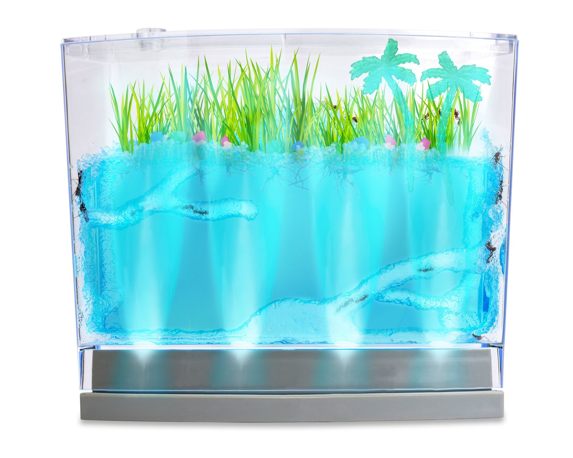 Lighted Ecosystem Ant Habitat SHIPPED WITH LIVE ANTS