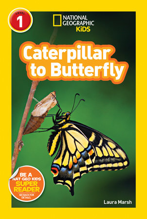 Caterpillar to Butterfly Life Cycle Book