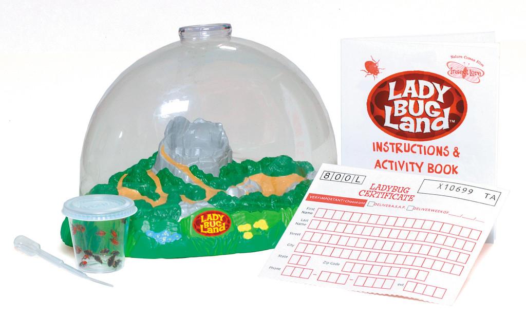 Ladybug Rearing Kit