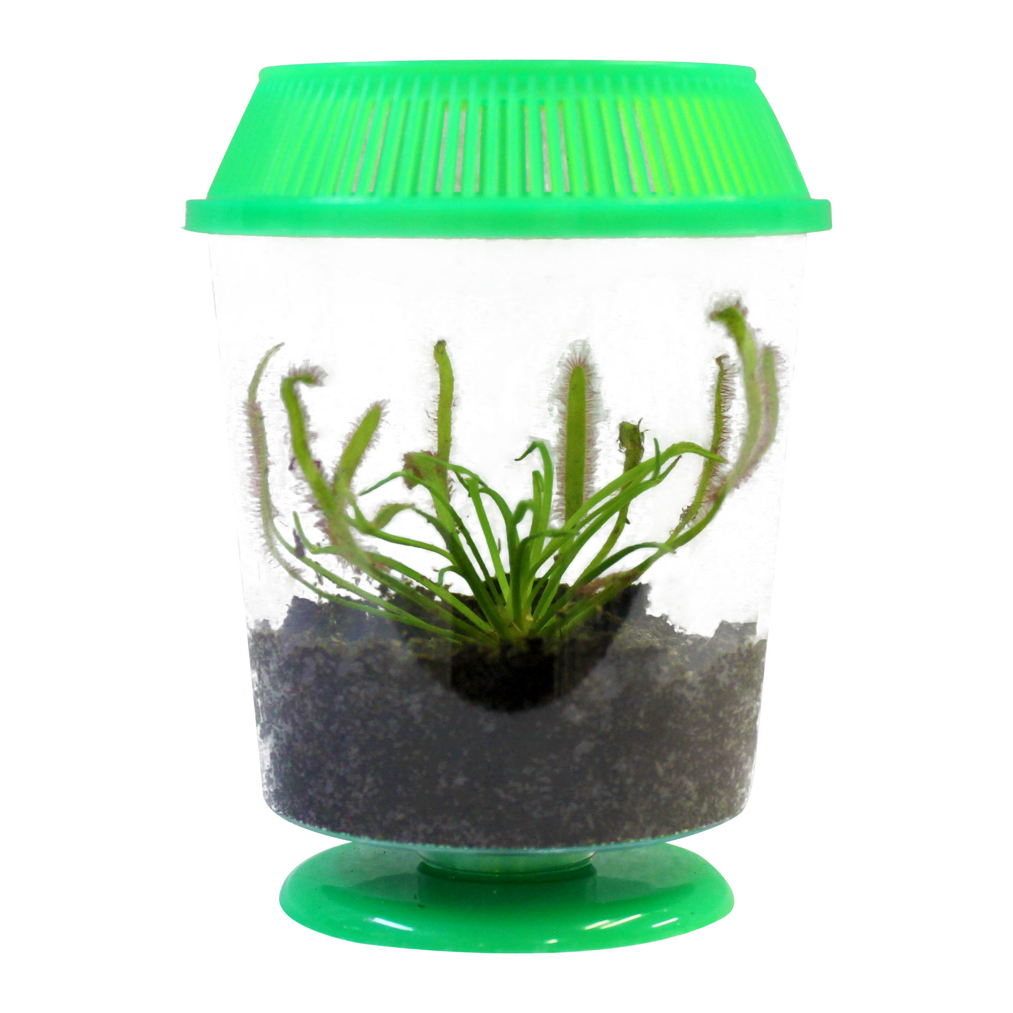 Venus Fly Traps Kits - Cool Bug Eating Fly Traps!