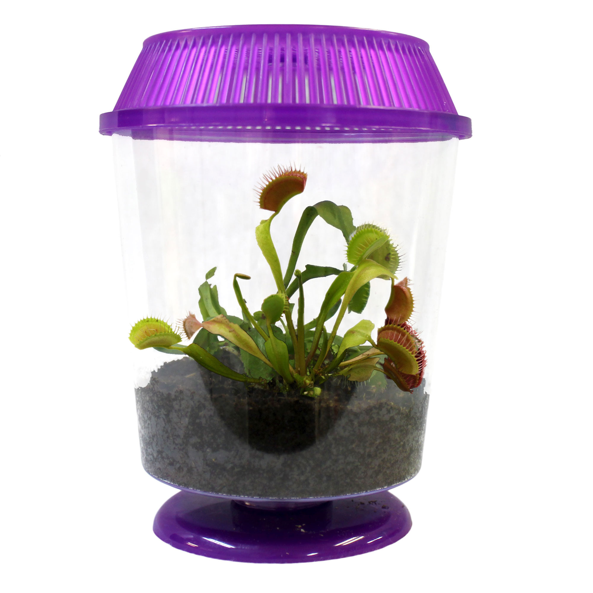 Venus Flytrap Fun Facts. Venus Flytrap Fun Facts. Fun Facts About ...