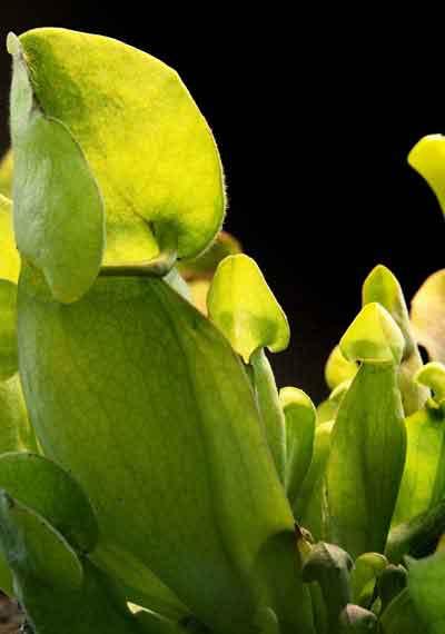Deluxe Carnivorous Plant Terrarium Kit