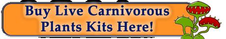 Buy Live Carnivorous Plants Kits Here!