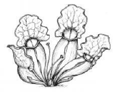 carnivorous-plant02