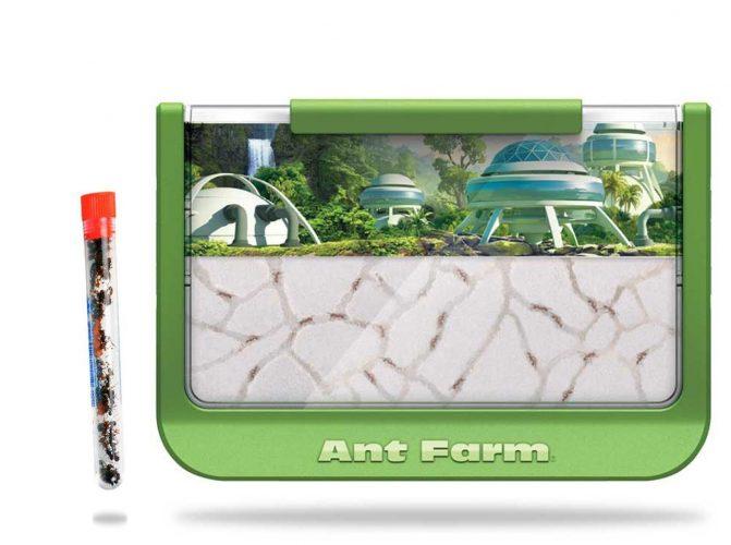 Rainforest-Themed Ant Farm with 1 Tube Ants